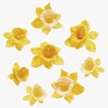 Нарциси за декорация жълти - 22 бр.