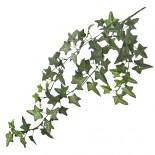 Клонка Бръшлян, зелен - 58 см