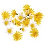 Маргаритки - жълто и бяло 20 бр.